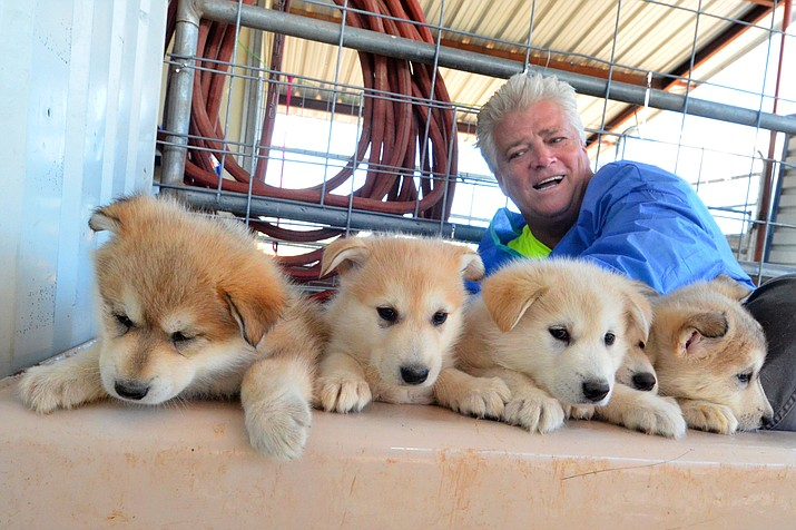 Mark Happe, founder of Pets Return Home, with the wolf dogs that have been rescued from California. (Vyto Starinskas/VVN)