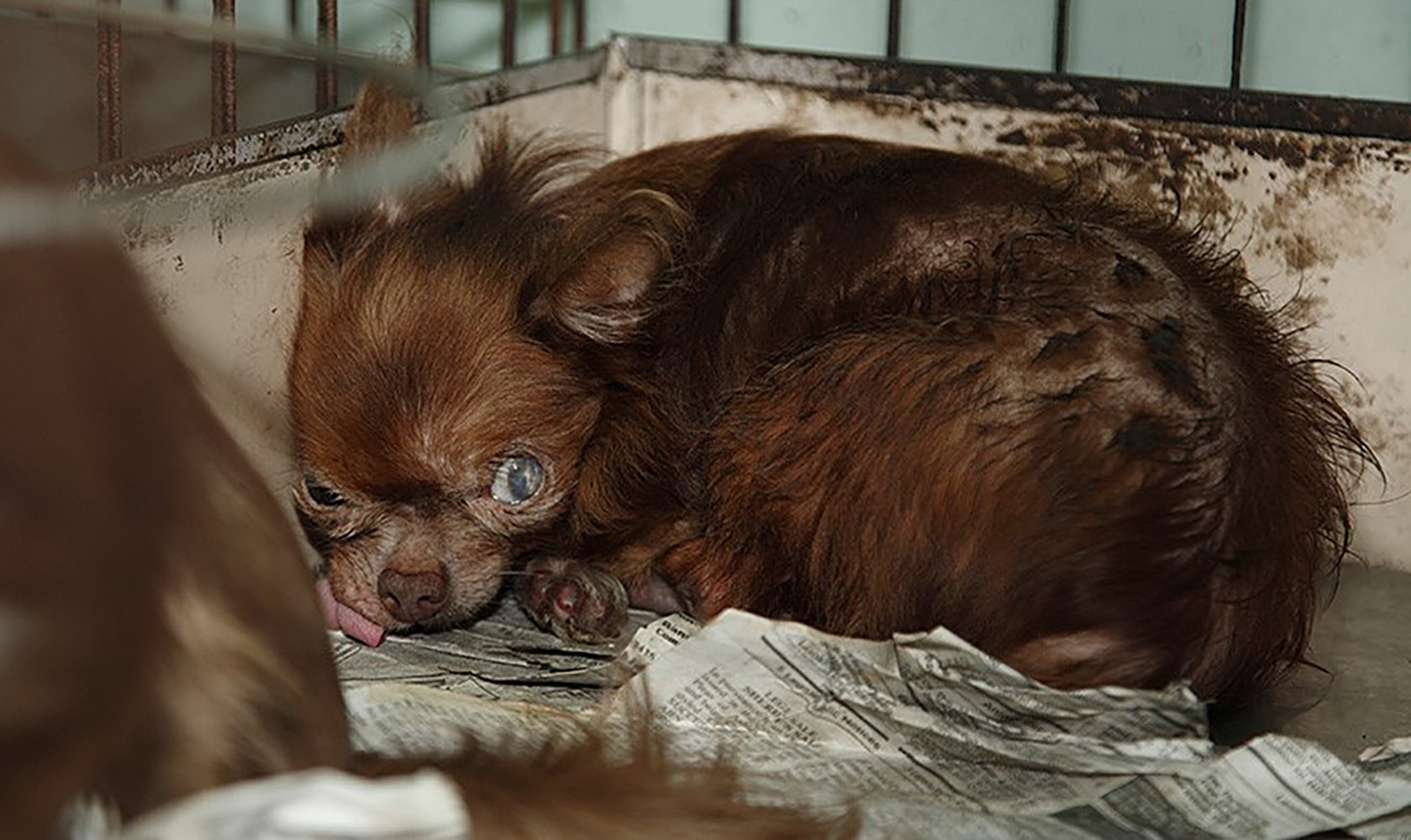 Powers Erasing Puppy Mills Is A Group Effort The Daily Courier