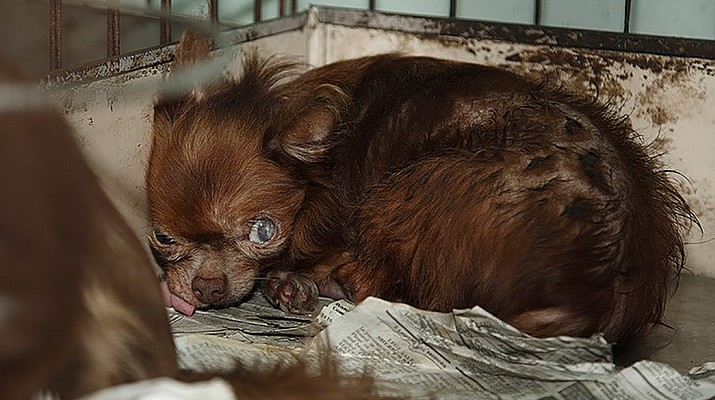 Powers: Erasing puppy mills is a group effort