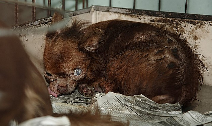 All About Pets: Erasing puppy mills is a group effort | The Daily Courier | Prescott, AZ