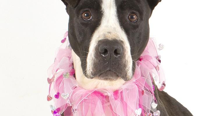 Pet Focus: Jewel, YHS Adoptions Center