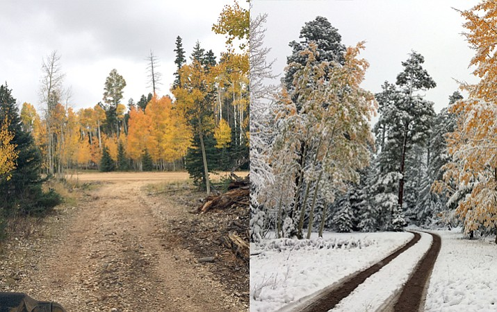 Winter came early to the North Kaibab Ranger District, muting its vibrant fall colors with a dusting of snow in early October. (Photo/Doug Wells)
