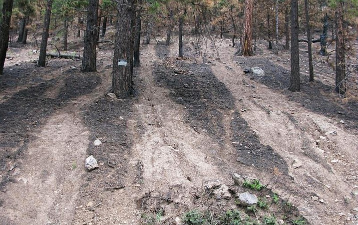 Examples of hillslope erosion along FR146 in Coconino County. The photo was taken after the Schultz Fire and shows rilling through ash.  (Photo/Arizona Geological Survey)