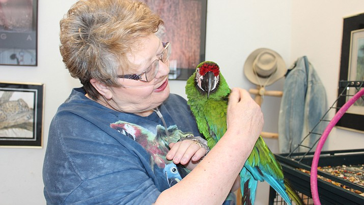 Kathryn Engelhardt, who founded Bird Haven Rescue and Sanctuary in 2009, holds a pet parrot at her home east of Kingman. The nonprofit bird rescue is holding a rummage sale Thursday through Saturday. (Photo by Hubble Ray Smith/Daily Miner)