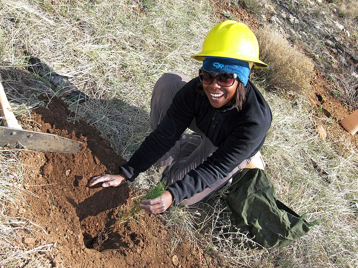A forest service worker plants a tree seedling on the Tusayan Ranger District  in 2012 after the X Fire swept through about 2,000 acres in 2008. (Dyan Bone/Kaibab National Forest)