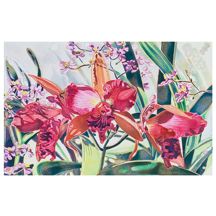 Soft Light Red Cymbidiums, watercolor by Meg Munro