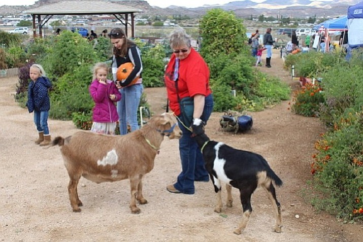 The Dig It Kingman Community Garden's 2018 Pumpkin Patch Day was held Oct. 20. It was a successful event and enjoyed by many. (Courtesy)
