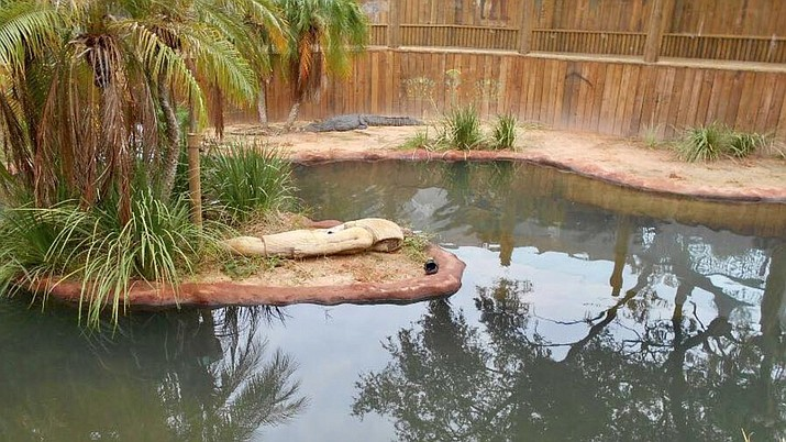 A Florida man jumped into this crocodile pit after he broke into the St. Augustine Alligator Farm and stripped down to his boxers. (St. Augustine Police Department)
