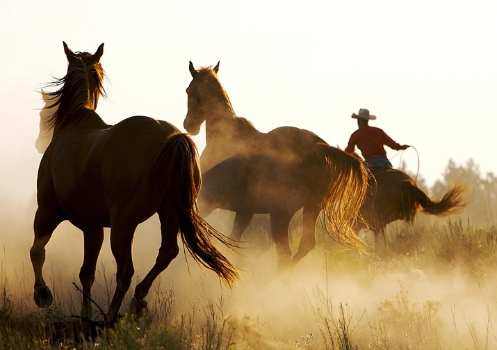 Federal authorities are investigating the deaths of two free-roaming horses found shot on national forest land in eastern Arizona. (Adobe Images)