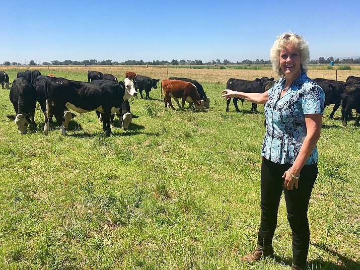 In this July 11, 2018 photo, animal geneticist Alison Van Eenennaam of the University of California, Davis, points to a group of dairy calves that won't have to be de-horned thanks to gene editing. The calves are descended from a bull genetically altered to be hornless, and the company behind the work, Recombinetics, says gene-edited traits could ease animal suffering and improve productivity. (AP Photo/Haven Daley)