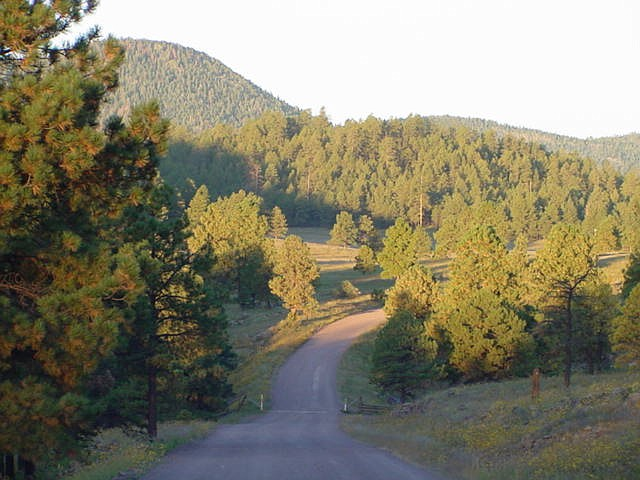 A Forest Service decision to cut down more than 1,300 trees that were more than 150 years old because of fears of an invasive parasitic plant is being criticized as breaking trust with backers of a thinning project. (Apache-Sitgreaves National Forest photo)