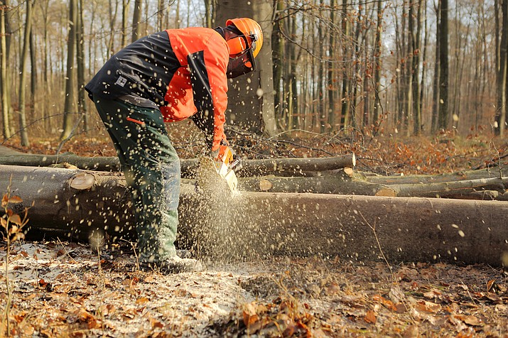 "Stakeholders of the Four Forests Restoration Initiative say the Forest Service's decision to cut ""old growth"" trees inconsistent with a broad consensus to retain the older trees. (Courier stock photo)"