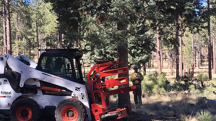 State Forestry cuts Capitol Christmas tree