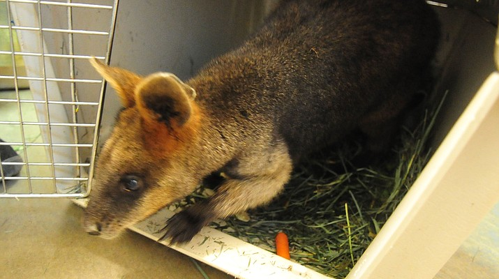 Heritage Park Zoo fire causes $10K in damage; 4 wallabies survive