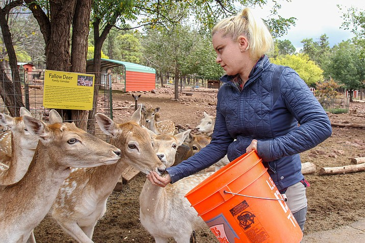 Amy Kravitz, a biologist with Grand Canyon Deer Farm in Williams, works closely with the Arizona Game & Fish Department to monitor captive deer for chronic wasting disease. The state has banned traditional deer farms, but zoos and animal sanctuaries are allowed to keep captive deer under strict regulation. (Photo by Stephanie Morse/Cronkite News)