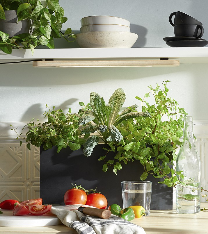 Grow herbs or other leafy greens indoors under a Growbar LED light fixture or near a sunny window. (Modern Sprout/ Courtesy)