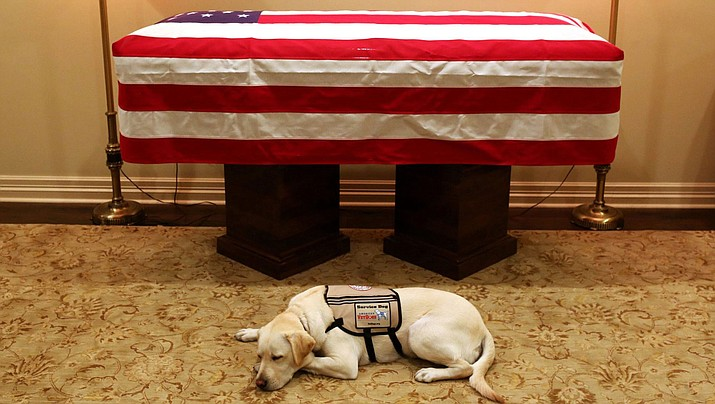 This Sunday, Dec. 2, 2018 photo, Sully, President George H.W. Bush's service dog lies in front of his casket in Houston. The 41st president died Friday at his home in Houston at 94. (Evan Sisley/Office George H.W. Bush)