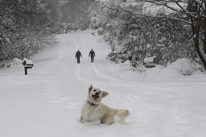 Josie, an English Retriever plays in the snow as her owners, Dawn and Mark Lundblad walk a snow-covered Sandy Cove Drive, Sunday, December 9, 2018 in Morganton, N.C. Over a foot of snow fell in the area creating a winter wonderland. (Kathy Kmonicek/AP)