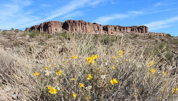 Desert beauty ranges from Monolith Garden rocks to Sonoran cactus