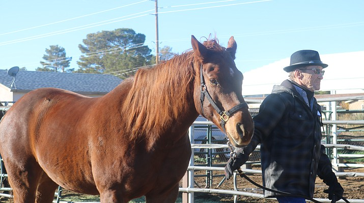 Bringing about positive change through Equine Assisted Psychotherapy