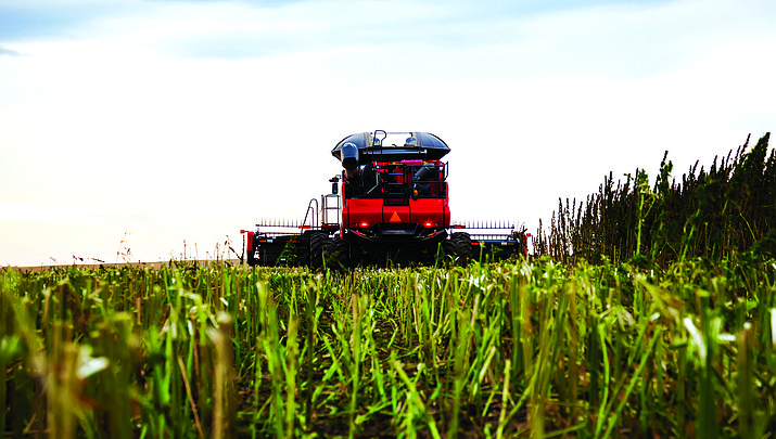 New commodity: Water-starved Arizona looks to hemp as new major agricultural offering