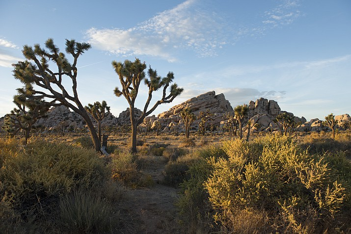 Imagine this with a sound track – sunset near Turtle Rock, Joshua Tree National Park. (NPS photo by  Hannah Schwalbe)