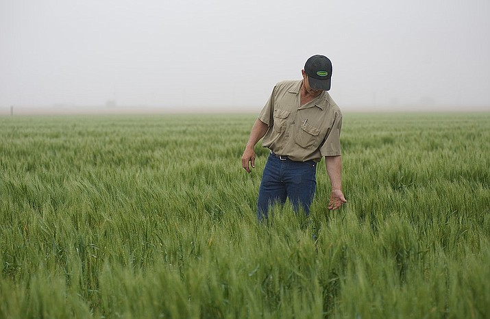 (USDA photo)