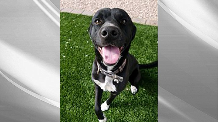Pet of the Week: Tux
