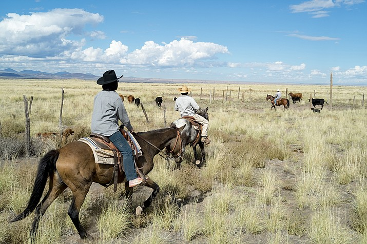 By 2020 Navajo Nation ranchers will see an increase of $2 for grazing fees. (Loretta Yerian/NHO)