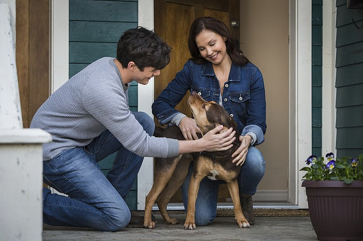 """This image released by Sony Pictures shows Jonah Hauer King, left, and Ashley Judd, with dog Shelby, portraying Bella, in a scene from Columbia Pictures' """"A Dog's Way Home. (James Dittiger/Columbia Pictures - Sony via AP)"""