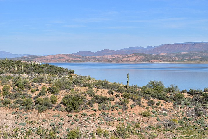 Roosevelt Lake, less than two hours from Phoenix, is home to tamarisk trees, which aren't native to Arizona. (Rachel Charlton/Cronkite News)