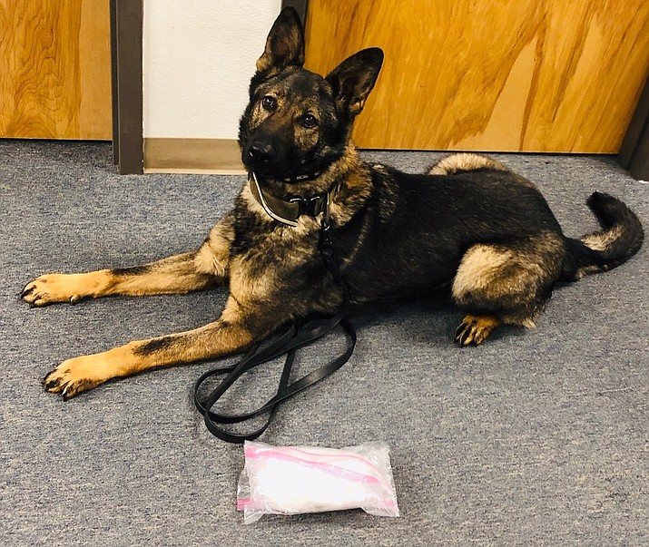Haddie, a Yavapai County Sheriff's Office K9, pictured with about a pound of methamphetamine she alerted to during a traffic stop in Cordes Lakes Monday night, Jan. 14. (Yavapai County Sheriff's Office/Courtesy)