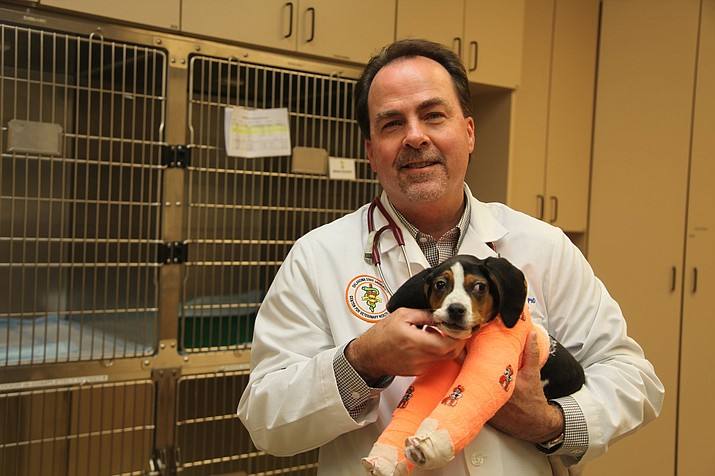 In this Jan. 23, 2019 photo provided by Oklahoma State University. Dr. Erik Clary holds a puppy named Milo in Stillwater, Okla. Milo, born with his front paws facing up instead of down and unable to walk, is recovering after surgery at Oklahoma State University's Center for Veterinary Health Sciences. (Derinda Blakeney/Oklahoma State University via AP)