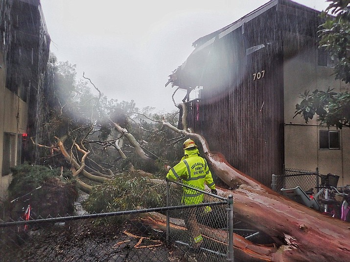 In this Saturday, Feb. 2, 2019, photo released by Santa Barbara County Fire, Santa Barbara County firefighters survey the scene of a large eucalyptus tree that fell into a two-story apartment complex on Bolton Walk in Goleta, Calif. (Mike Eliason/Santa Barbara County Fire)