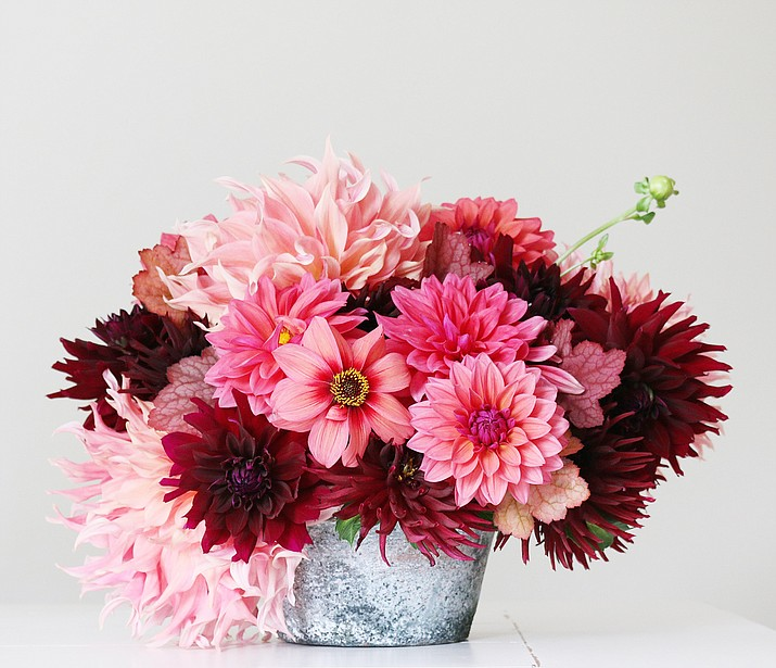 New for 2019 from Longfield Gardens: Flirty Fleurs Sorbetto Collection, featuring dahlias HS Date, Rip City, Penhill Watermelon and Nuit d'Ete. (Longfield Gardens)