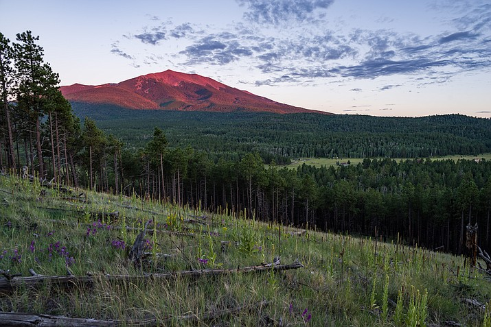 View of the San Francisco Peaks from the northwest on the rim of Walker Lake crater, located north of the junction of Hart Prairie Road and FR 418 of Coconino National Forest, Arizona. Helicopters are a common sight over the forest carrying out logs, a product of the forest thinning project. (Forest Service photo by Deborah Lee Soltesz)