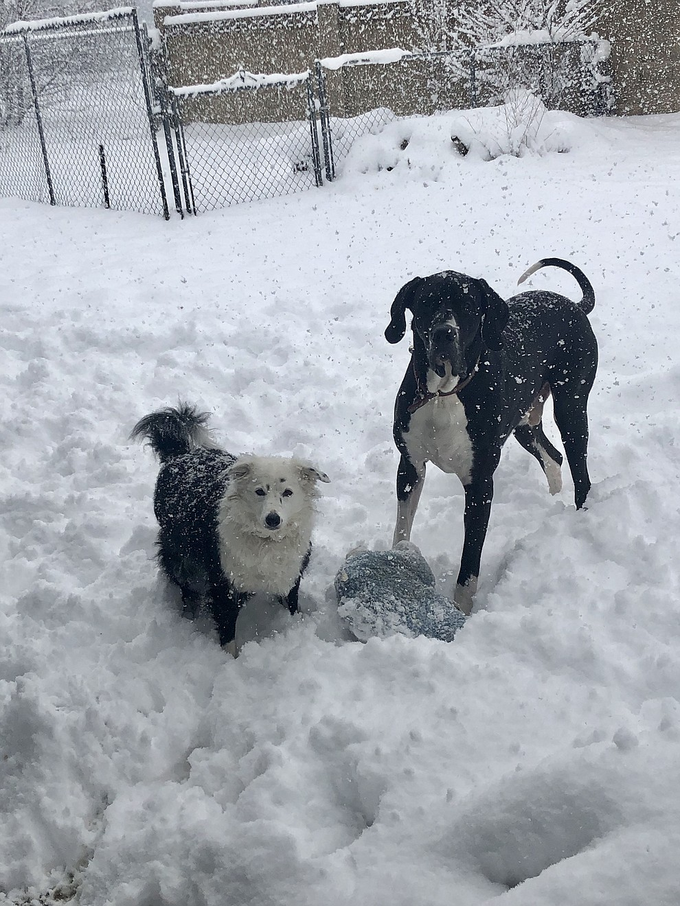 Our dogs enjoying their snow day on February 21, 2019. (Marissa Busk)