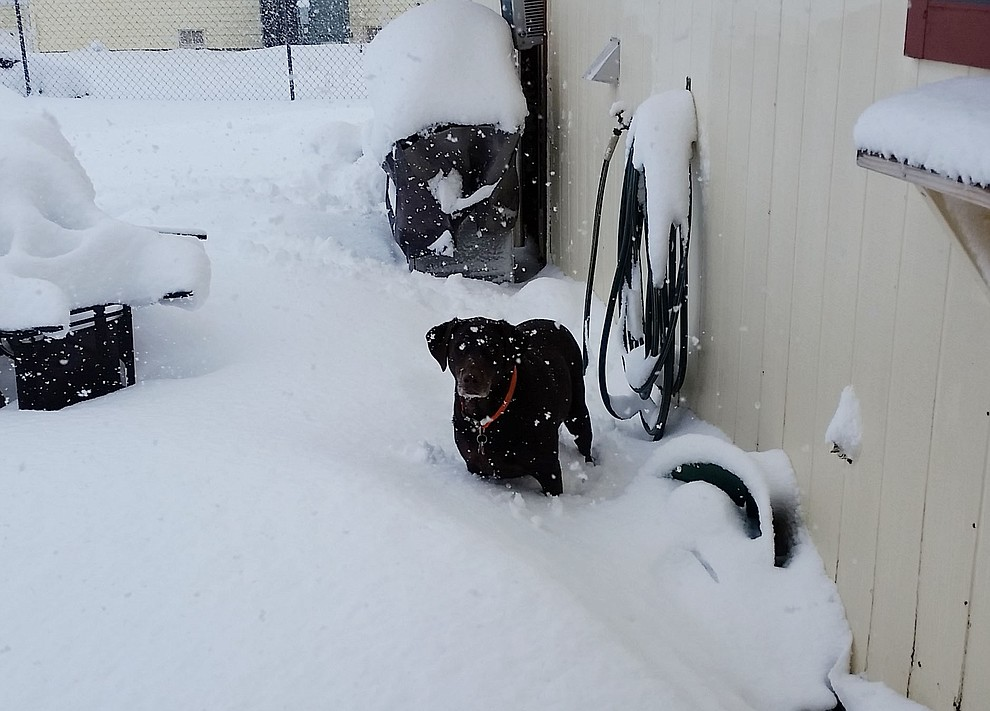 My dog Sydney enjoying the snow.