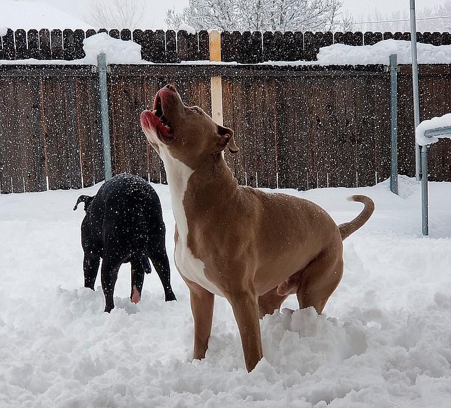 2019 Snowstorm by Natasha Lacey