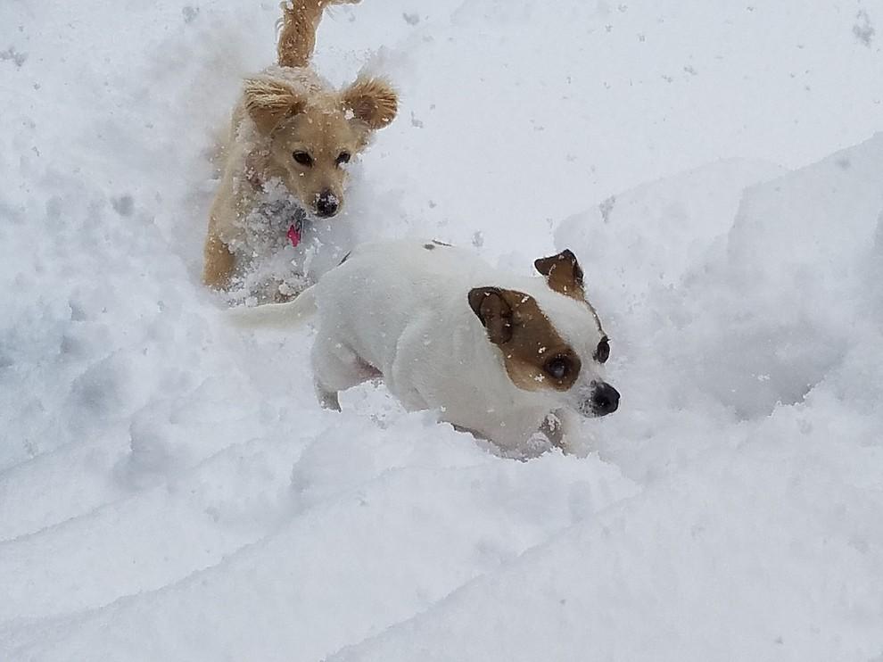 Meeka and Barkley enjoying their first snow storm in Prescott, AZ. (Donna Dotzler)
