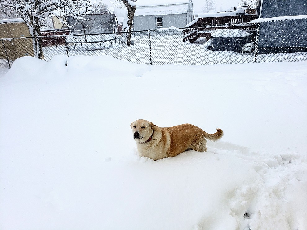Picture of Jenna not wanting to play in Prescott Valley snow. (Al Lucero)