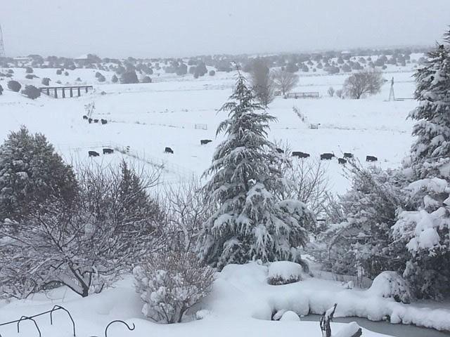 Snowstorm 2019 by Diane McKelvey