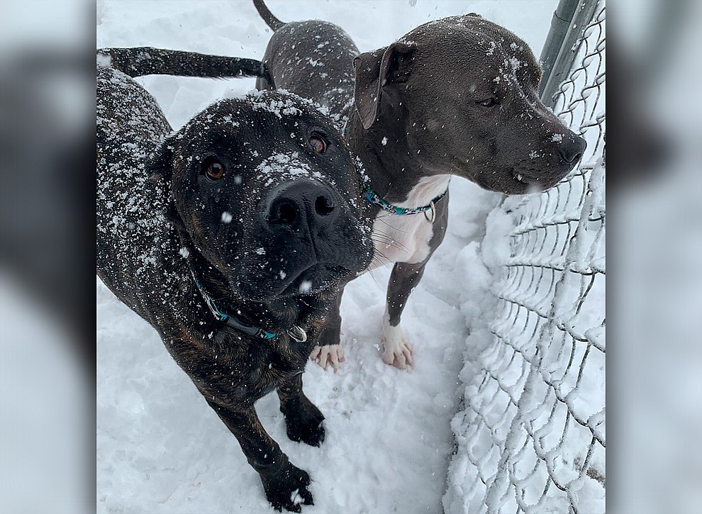 Titan and Banks. Best friends enjoying the snow in Prescott Valley (Sheldyn Savage)