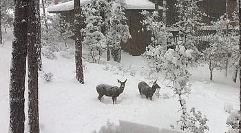 Photo Galleries: Prescott area snow storm Feb. 21, 2019 photo