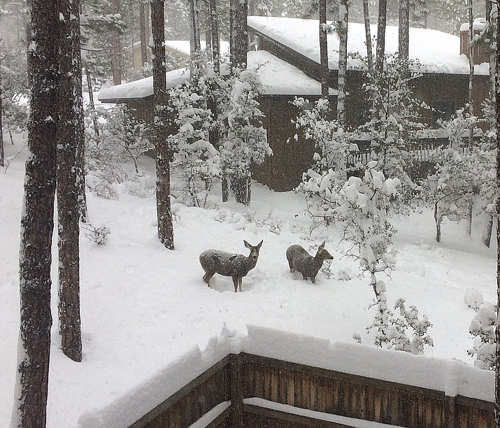 Deer up to their bellies in Hidden Valley. (Photo submitted by Susan Susan Schneiter)