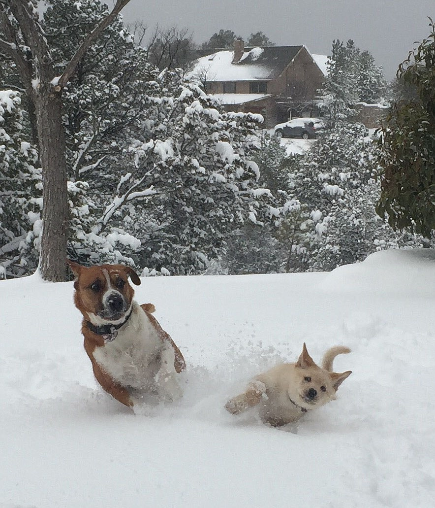 Charlie (puppy) and Pete playing in the snow together in Prescott.
