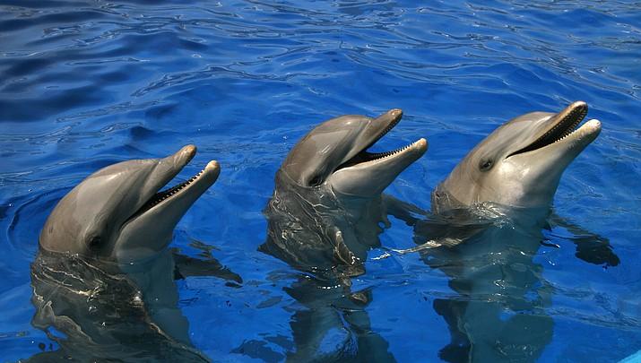 4 dolphins moved from Arizona facility to Caribbean park