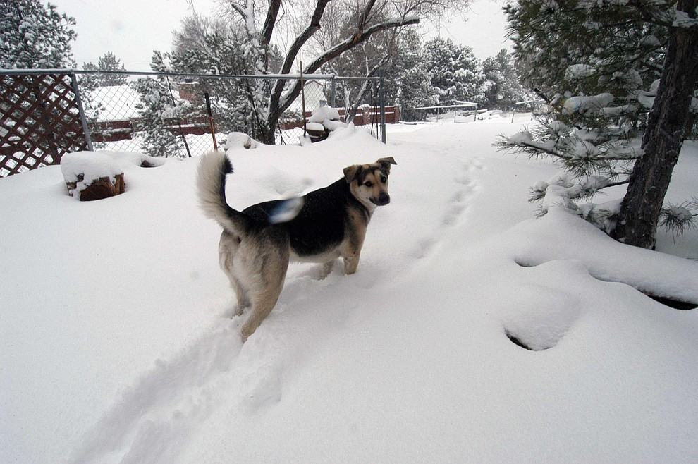 Lilly playing around in the morning snow in Taylor Hicks. (Paul Richard)