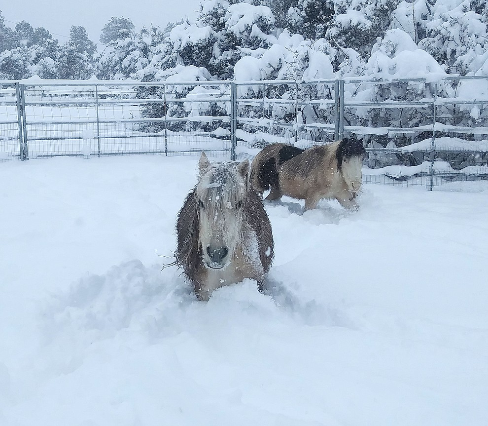 Snowstorm 2019 by Jen Maurer