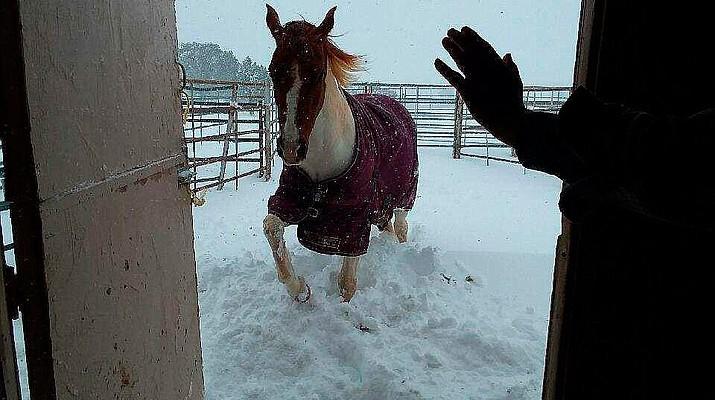 More Snow Photo Galleries: Prescott area snow storm Feb. 21-22, 2019